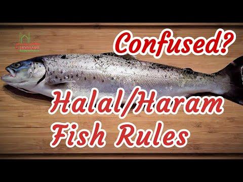 Halal & Haram Fish Islamic Rules - Ayatollah Sistani