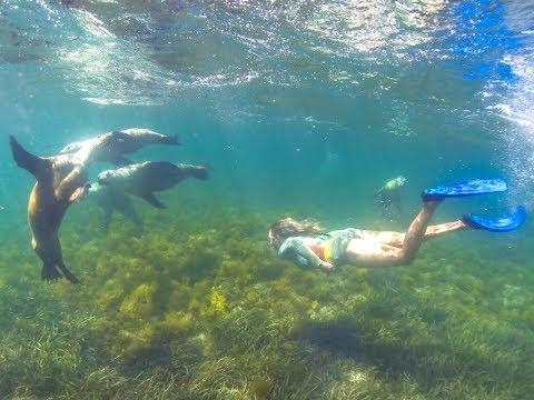 Sea Lion Swim -  The Blonde Nomads