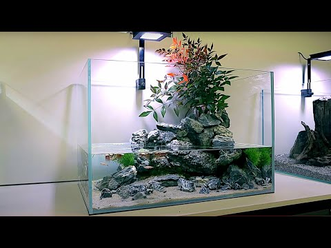 aquascape-tutorial:-white-cloud-mountain-minnow-stream-aquarium-w/-natural-spring-(how-to)