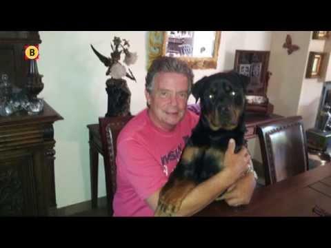 In beslag genomen hond Diesel mag niet terug naar Son en Breugel