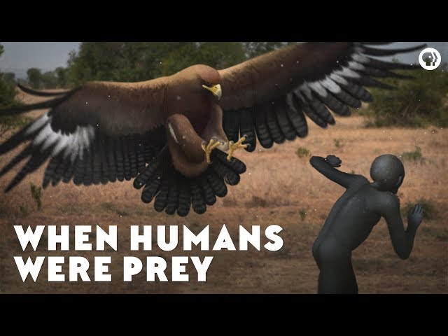 When Humans Were Prey