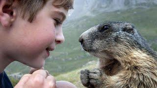 なぜか動物に好かれちゃう…アルプスの少年マテオ君。