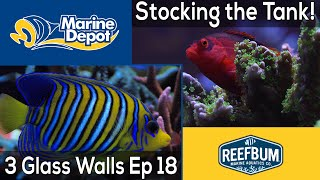 Stocking the Tank: 3 Glass Walls with Reefbum Part 18