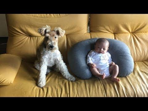 La-La Means I Love You    - a fox terrier meets a tiny princess -