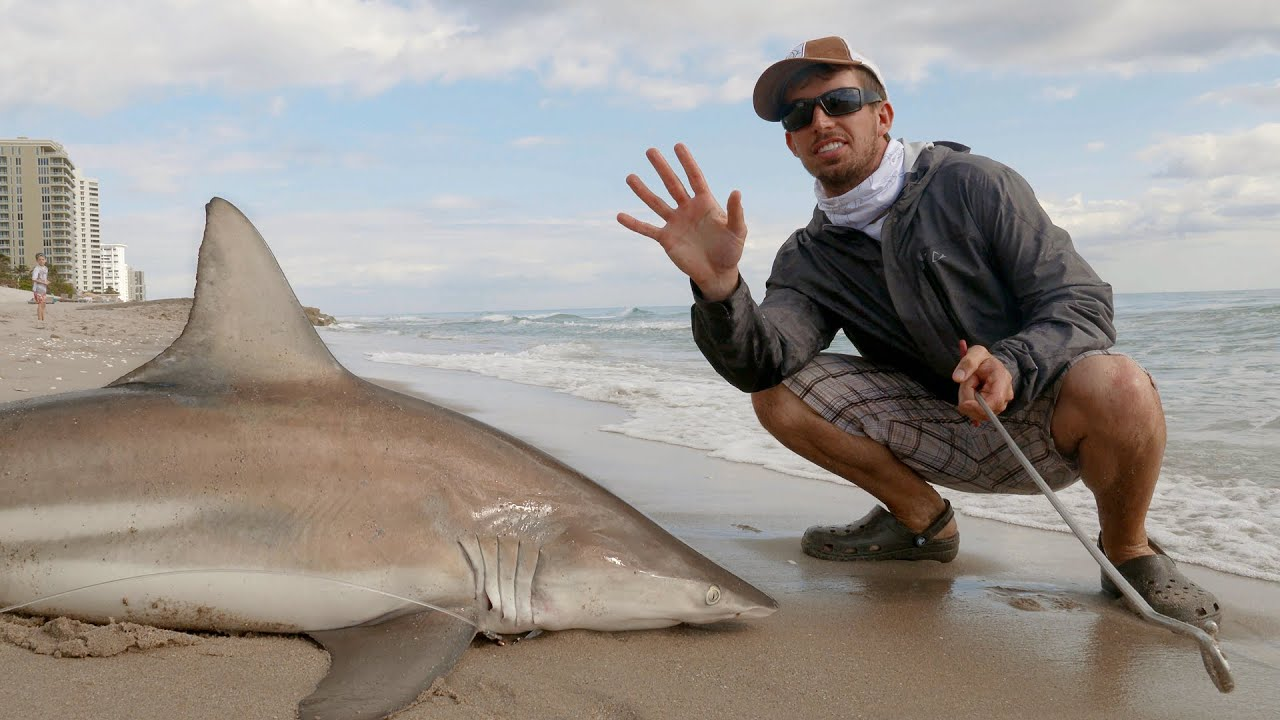 Fishing for blacktip sharks with sunsect 4k youtube for How to go fishing