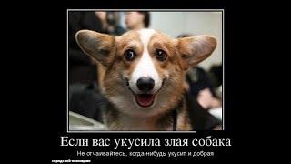 Лучшая подборка Демотиваторов смешных надписей и фотоприколов!