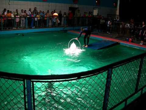Fundaci n juan vicente seijas aquarium de valencia for Aquarium valencia precio