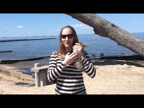 Joey the Trained Ferret's first trip to the beach!!!
