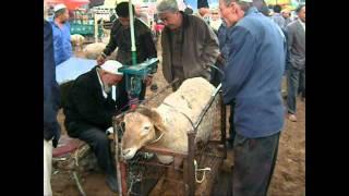 喀什 Marché des animaux à Kachgar Septembre 2011