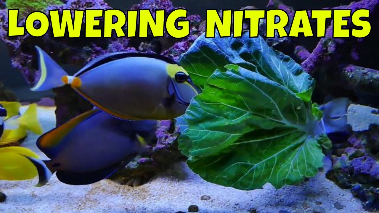 lower nitrates in reef tank one way to lower nitrates youtube
