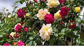 Траурная корзина красных роз с лентой - YouTube