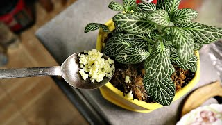 1 грамм этого и зацветают все растения в доме проверено Бабушкин рецепт подкормки цветов в доме