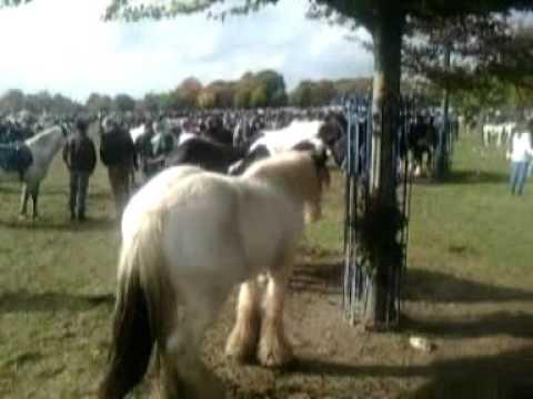 BALLINASLOE HORSE FAIR 2015