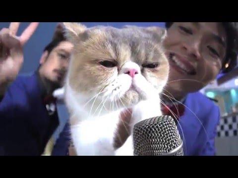 歌う猫!ブサかわ猫アリスがイケメングループメンバー入り!純烈×アリス「幸福あ そび」