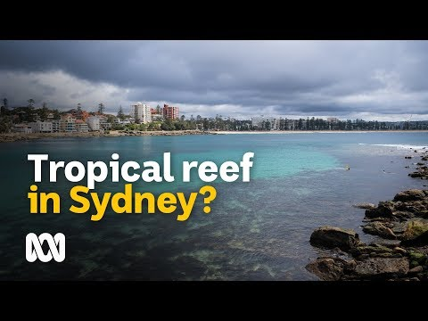 Could Sub-tropical Reef And Fish One Day Inhabit Sydney's Waters? 🐠
