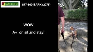 Bentley- Adoption Video- Bark Busters Home Dog Training