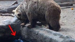 10 невероятных случаев, когда животные спасают друг друга