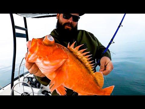 California Bosco Rockfish - Catch & Cook (Best Ways To Eat Rock Cod)