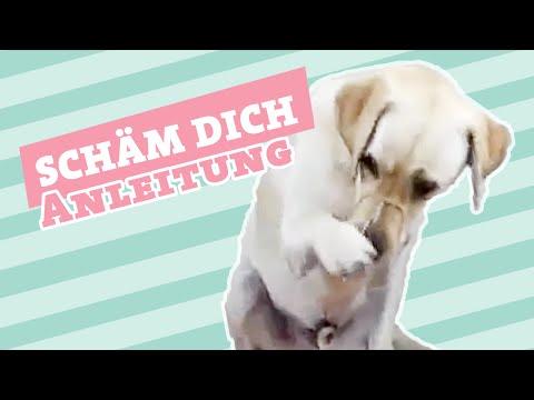 SCHÄM DICH  | Hund schämen beibringen | Hund Tricks beibringen