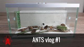 ANTS vlog #1 MRÓWKI❗️