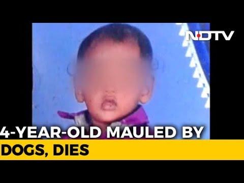 4-Year-Old Boy Mauled By Stray Dogs Dies In Andhra Pradesh's Guntur
