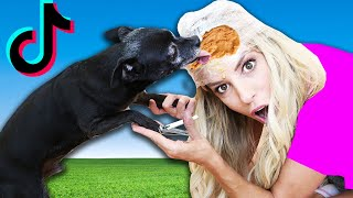 Trying Tik Tok Dog Challenges to See If They Work! PawZam Dogs