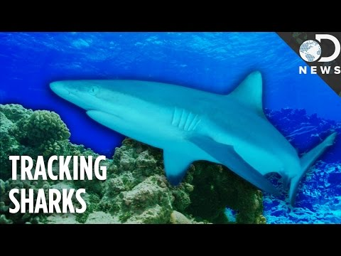 Could 'Nuclear Sharks' Hold The Key To Protecting Marine Life?