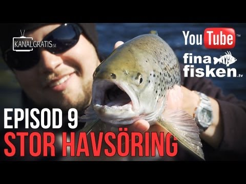Fina Fisken TV - EPISODE 9 - Big Sea Trout (English Subtitles)