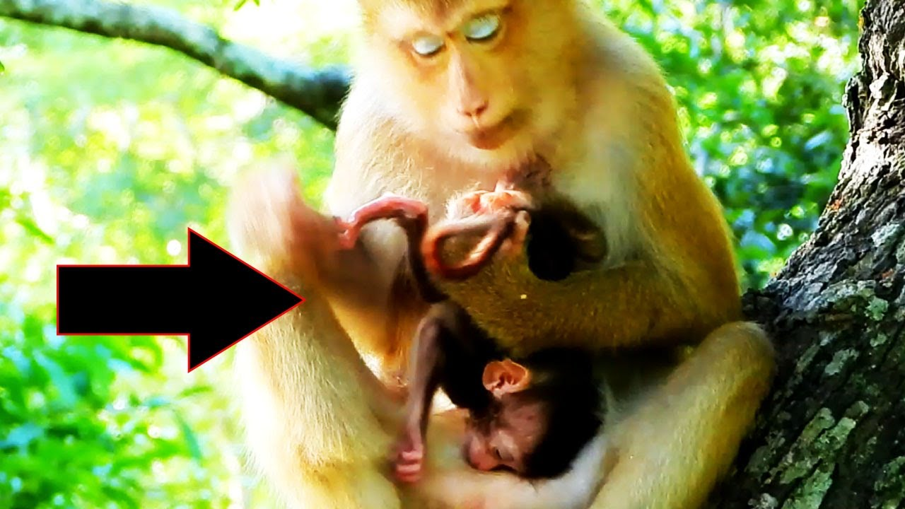 Worse holding little baby monkey REX by mom ROSE