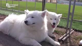 Выставка собак в Краматорске