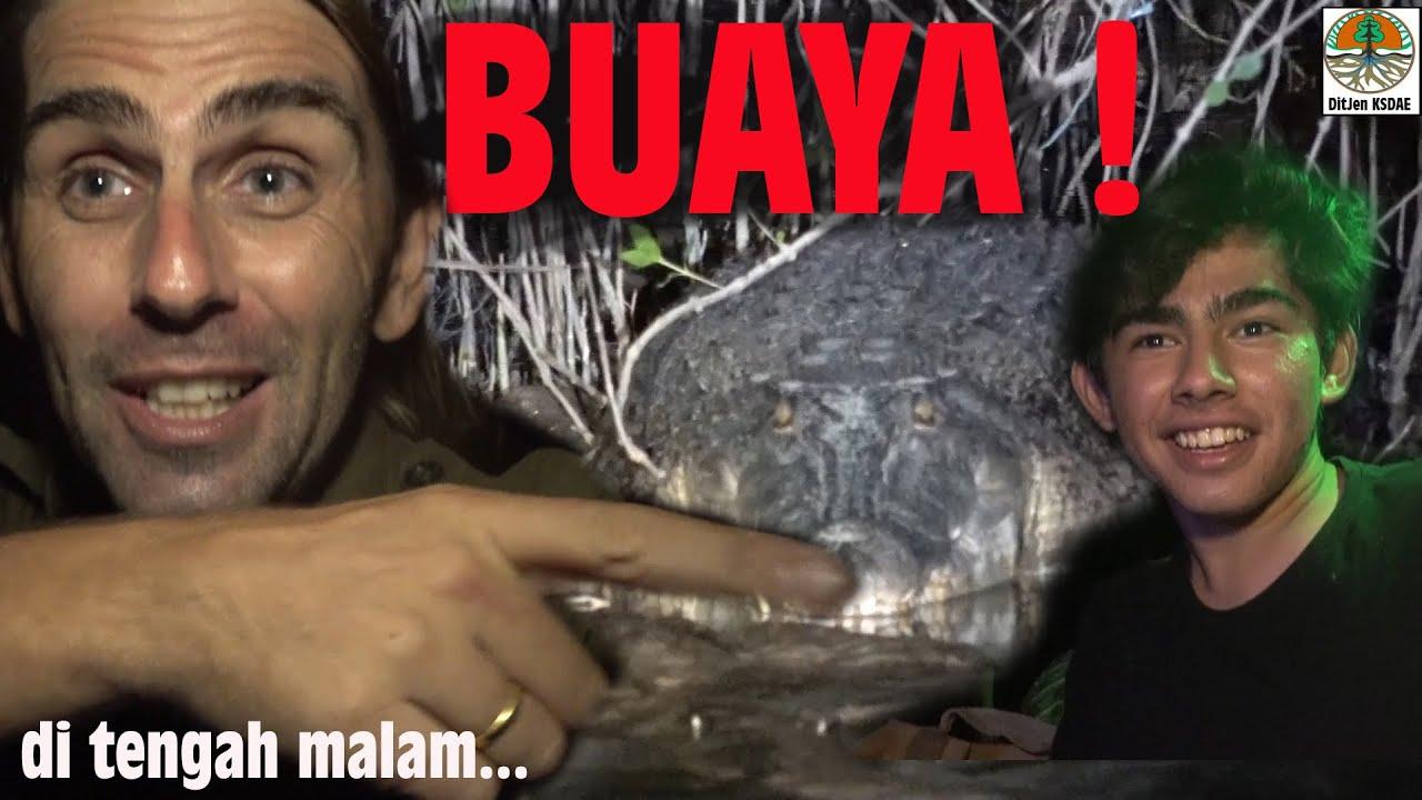 Recherche de crocodiles marins, en pleine nuit.