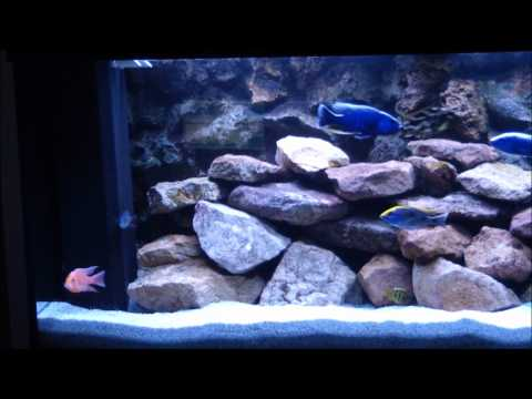 malawi aquarium 450l youtube. Black Bedroom Furniture Sets. Home Design Ideas