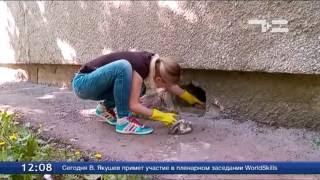 В Тюмени зафиксирован случай массовой гибели кошек