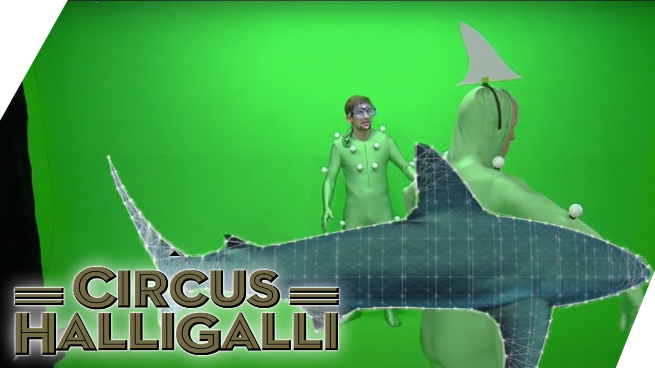 Cicus Halli Galli