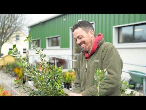Skibbereen Garden Centre - Promotional video