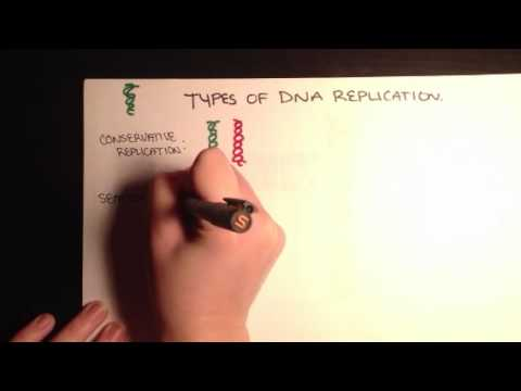 Types of DNA replication