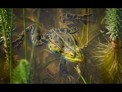 Cool Jobs: The Amphibian Biologist