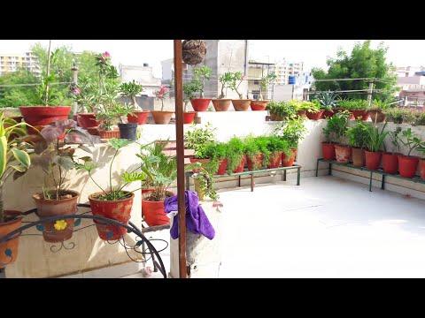 Garden Overview    Fun Gardening    17 Aug, 2017