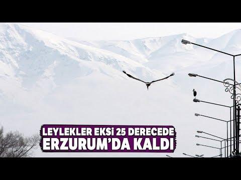 Göç Edemeyen Leylekler Eksi 25 Derecede Erzurum'da Kaldı