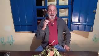 Dente de Leão - Conversando sobre plantas medicinais com Marcos Guião