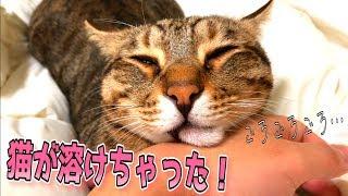寝起きにゴロゴロ喉ならして甘えてくる猫がかわいすぎるんじゃあ… thumbnail