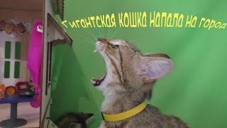 Гигантская кошка напала на домик где живут котята!!!/ kotyata v igrushechnom domike/kittens in house