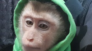 Khai And Monkey Baby Sam Haven't Been Live For A Long Time Lovely