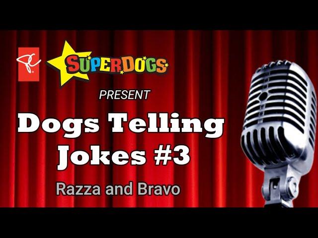 SuperDogs | Dogs Telling Jokes 3: Razza & Bravo