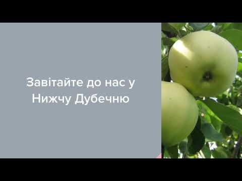 Садовый Центр Зелений Двір - Яблоня Пепинка Литовская