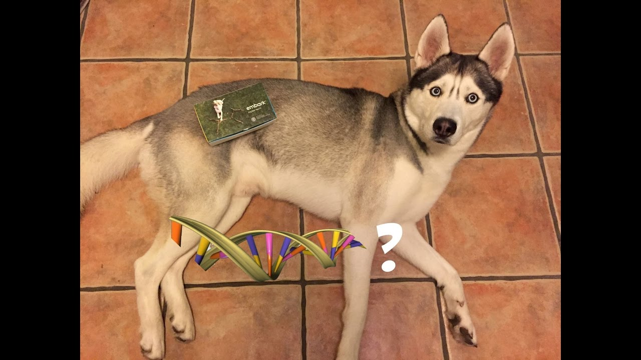 Getting my Dog's DNA Sample!