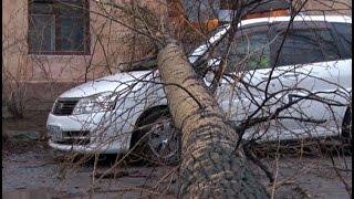 На машину хабаровчанина во дворе его дома упало дерево.MestoproTV(, 2016-05-05T23:53:26.000Z)