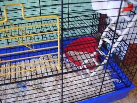 Как обустроить дом для крысы :)