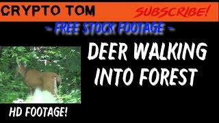 Deer Walking into forest - Free Stock Footage - HD Footage!
