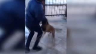 Не надо было дёргать собаку!